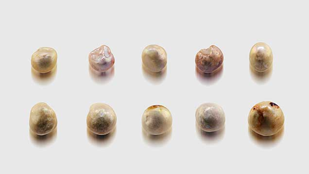 Undrilled natural pearls in various sizes.