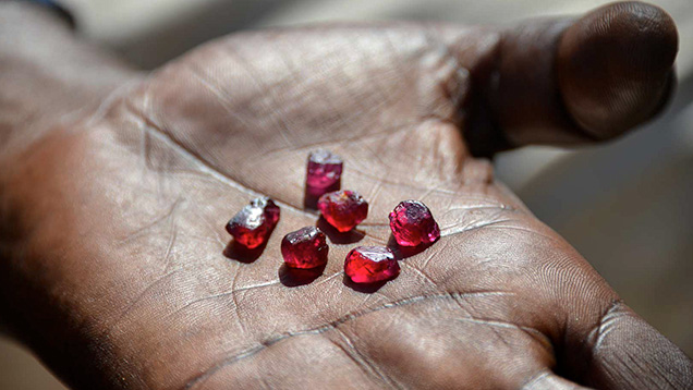 Rough rubies from Zahamena National Park in Madagascar.