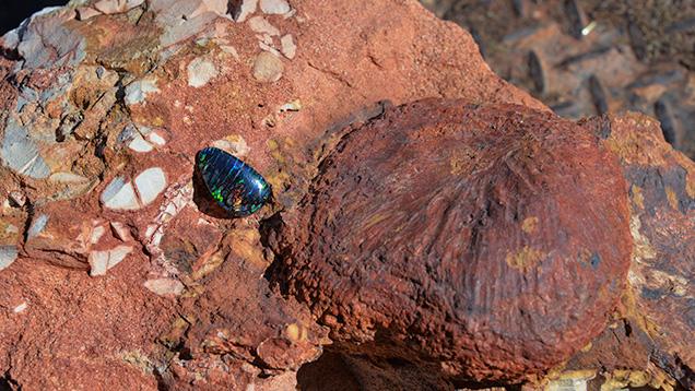 Boulder opal from Koroit