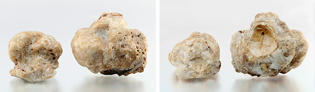 Fossilized pearls after removal from host shell.