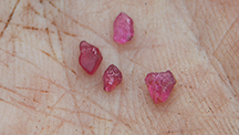 Facet grade pink rubies from the Mustang concession.