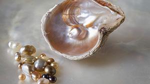 Pinctada maculata pearls and mollusk shell