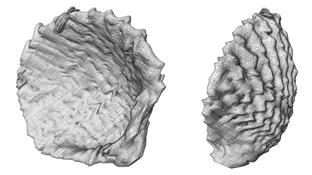 真珠内部の貝殻の3D画像