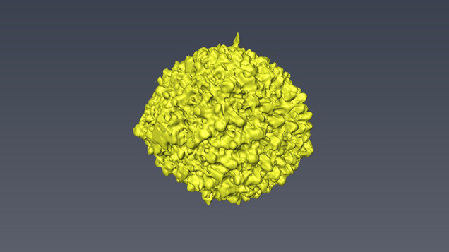 3-D image of a foraminifera structure within pearl