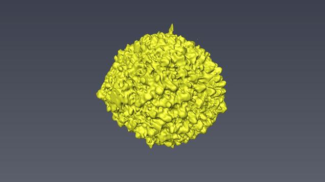 真珠内部の有孔虫の構造の3D画像